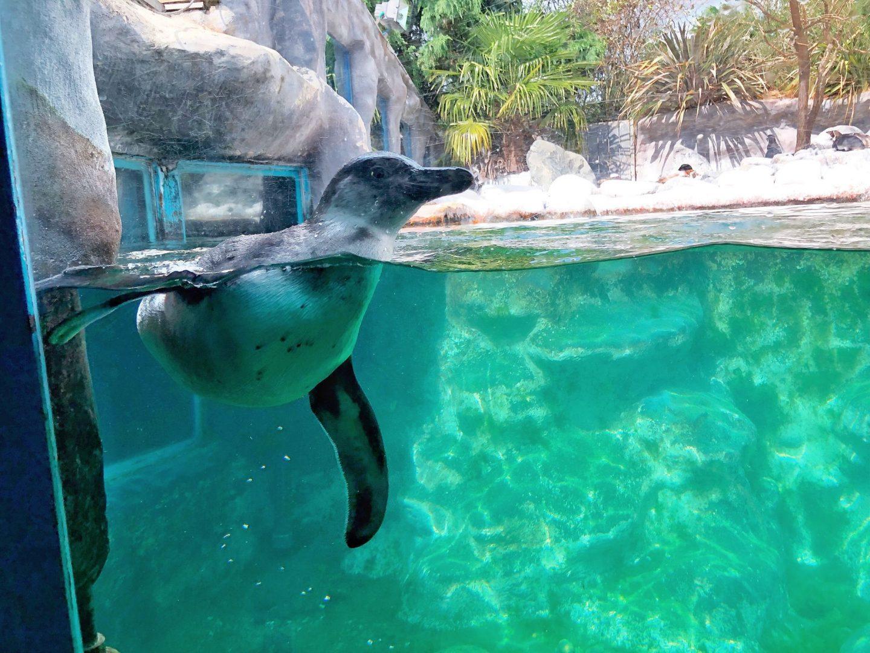 Penguins Colchester