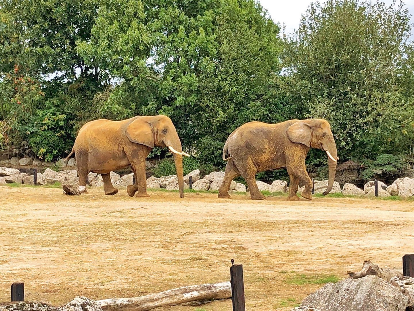 Colchester Zoo Elephant Enclosure