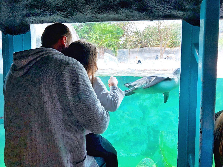 Colchester Zoo Penguin Enclosure