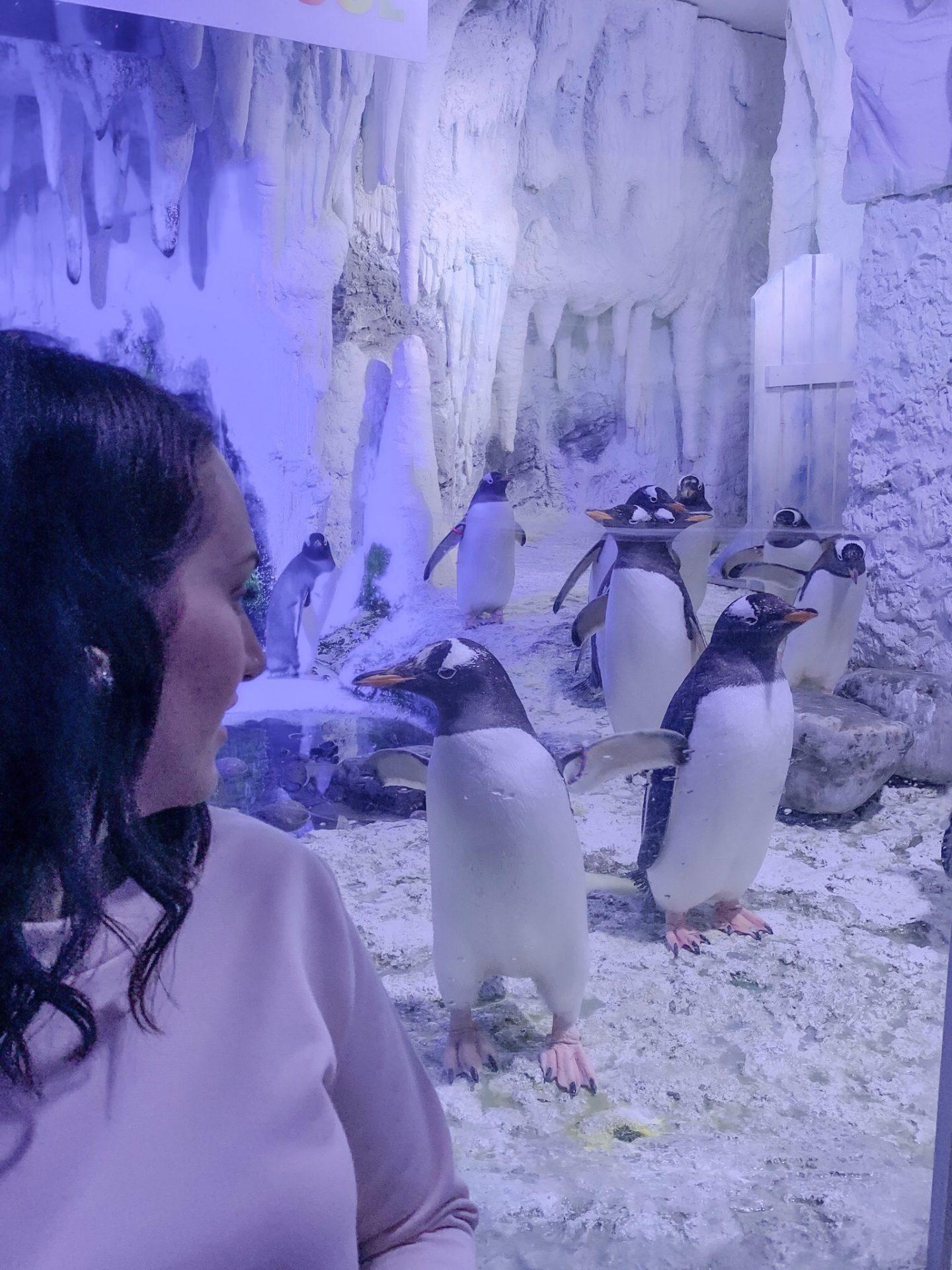 Penguins London Aquarium