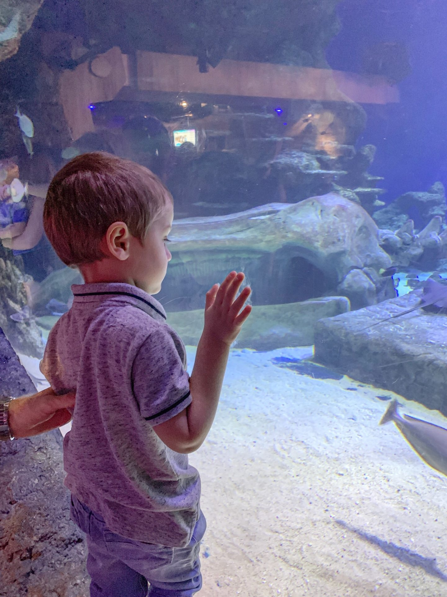 London Sea Life Day Out With Kids