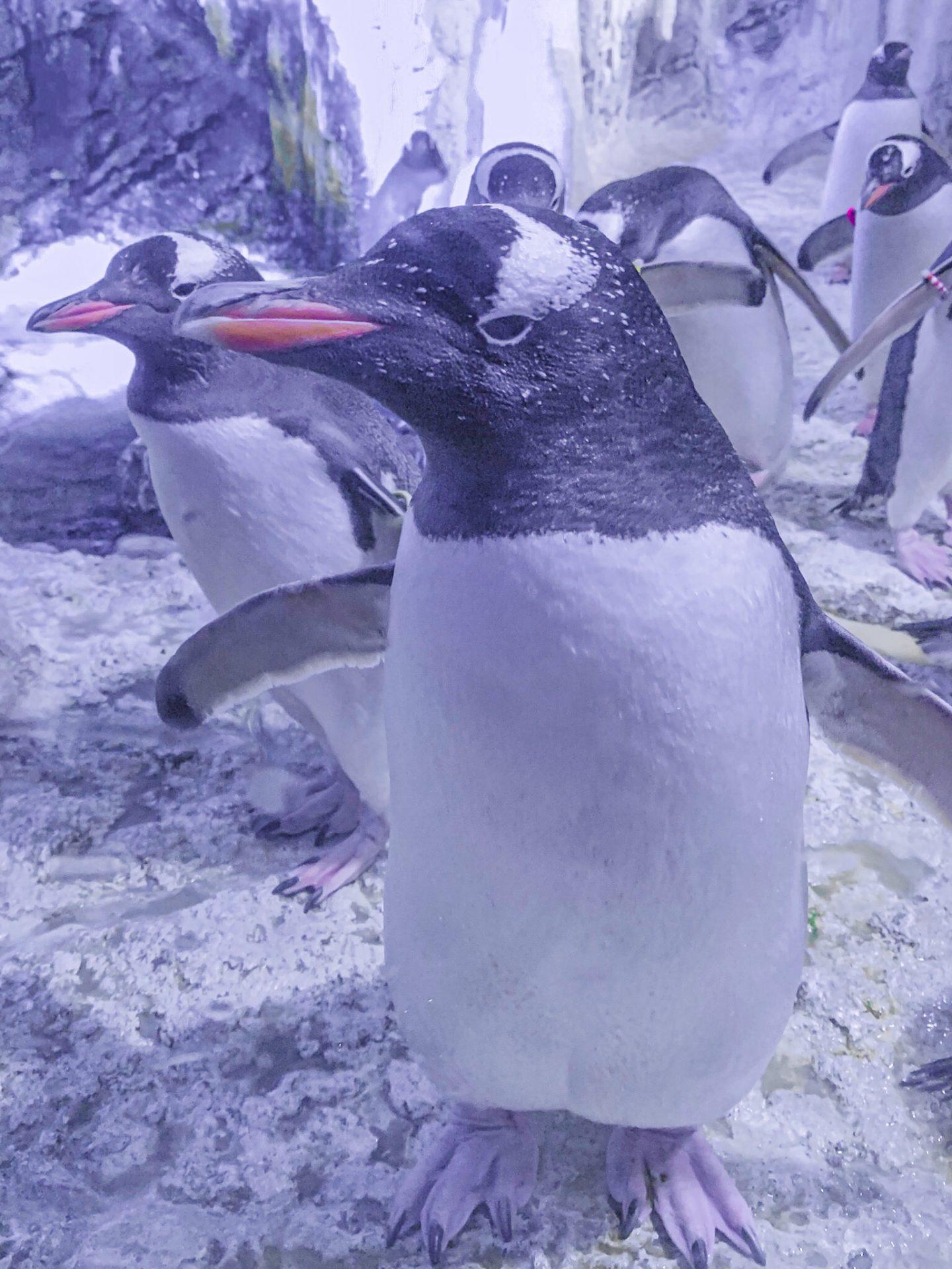 Penguins - Sea Life London
